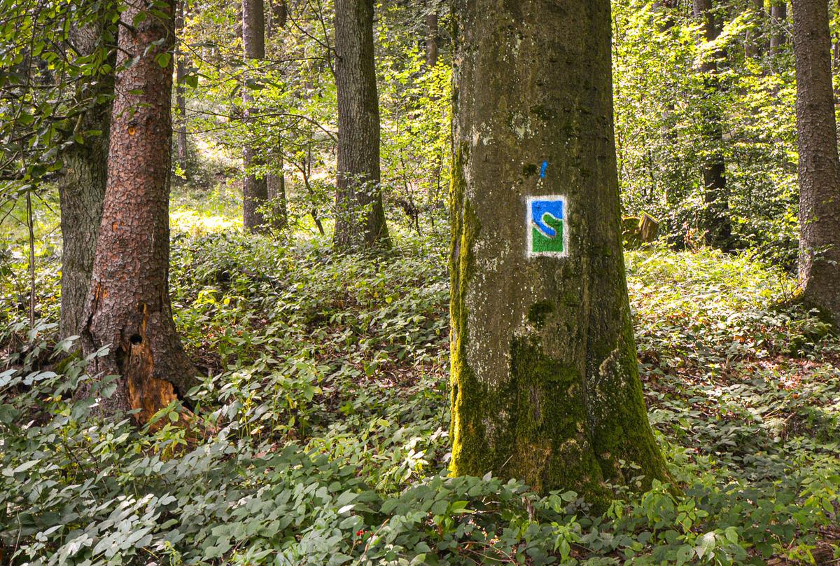 Waldboden und einige Bäume