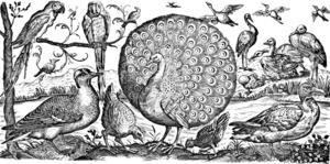 verschiedenen Geflügelarten