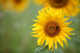 Den Garten klima-fit machen