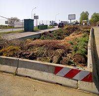 Grube der Grünschnittsammelstelle gefüllt mit diversen Grünschnitt